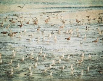 Ocean Photograph Beach Shore Decor Sea Gulls Nature The Gangs All Here Coastal Down the Shore Jersey Shore Nautical Photography seascape