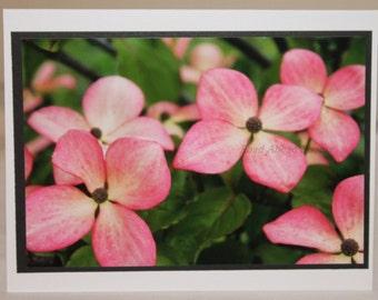 photo card, pink dogwood flowers, photography
