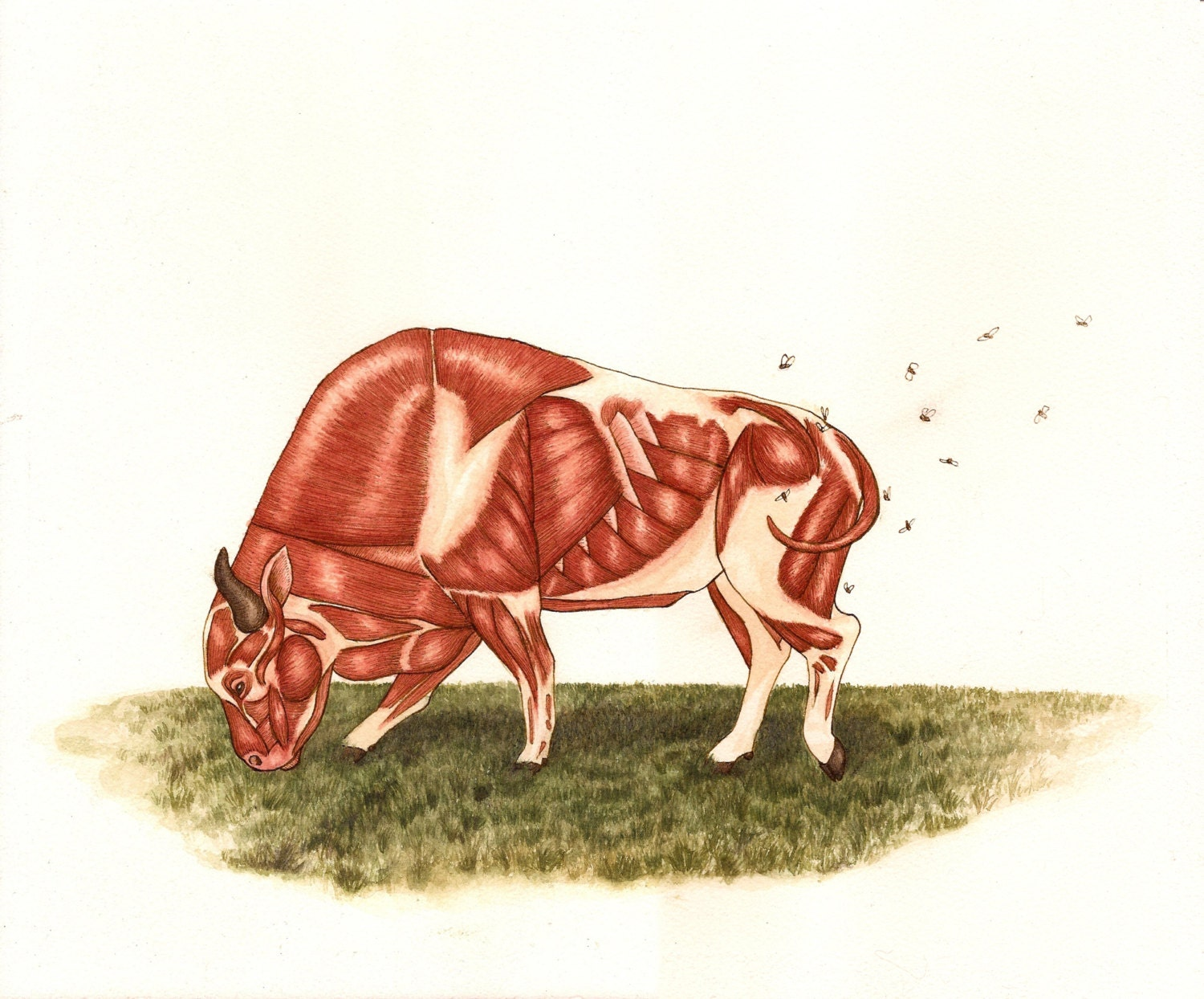 Rare Bison Without Skin Anatomy Illustration Drawing Print Of