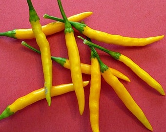Burapa Pepper, Thai Yellow Chile, 15 heirloom seeds, scorching hot, great fresh or dried, complex flavor,  golden fruit, pretty plants