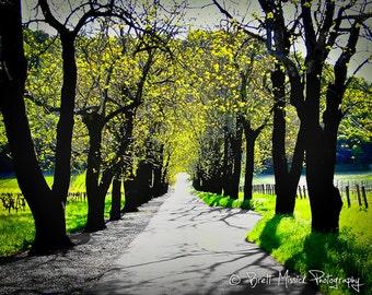 16x24 Napa Valley in Spring Fine Art Print- Napa Sonoma Wine Country Vineyard Photography