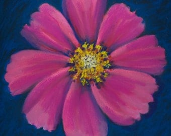 "Fine Art Giclee Print, Cosmo, Flower, Pastel Painting By Jan Maitland, Flower Portrait, Pink Flower, 8"" X 8"" Archival Print"