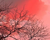 Tree branches photography red sky 5x7 fine art print landscape nature photography red watercolor fade surreal dreamy bright