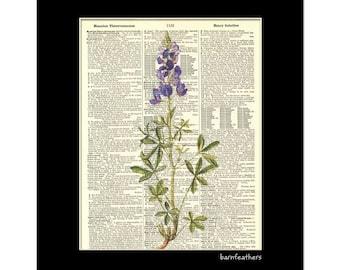 Vintage Dictionary Art Print - Bluebonnet Flower - Gardening - Dictionary Page - Book Art Print  - Home Decor No. P151