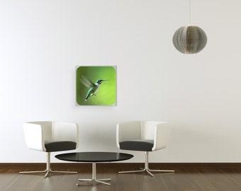 Magnetic Wall 'hummingbird'