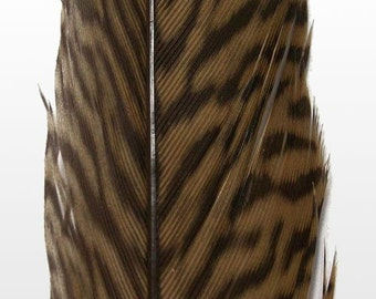 "Golden Tail Pheasant Feathers.  8/10"" (20-25cm) .  UK Supplier"