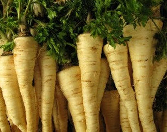 Parsley Root 'Arat', 30+ seeds