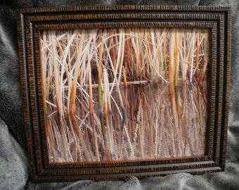 Cattails Framed Photograph - Autumn on Beaver Creek in Oregon