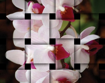 DIGITAL DOWNLOAD, Orchid Basket Weave, White, Pink, Green image, Abstract Flower, stock photo, available in print