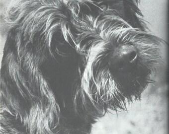 5 Vintage dog poster