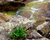 Nature Photography, Fine Art, Mountain Creek - FREE SHIPPING - EJsPhotography