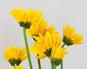 Yellow, flowers, minimalist, inspirational, cheerful, spring, summer, macro photography, nature