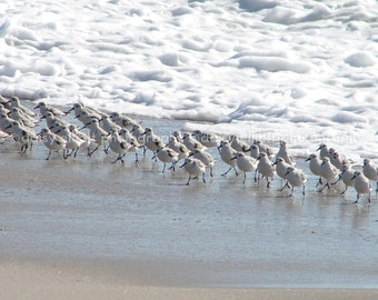 Sandpipers - Cape May