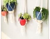 "36"" Cotton Plant Hanger - Fringe"