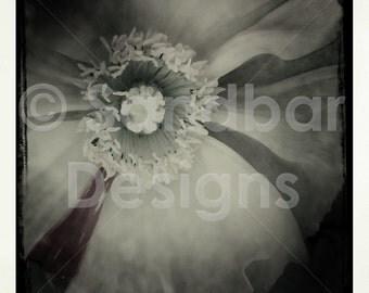 4 x 4 photo flower