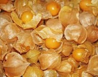 Ground Cherry Plant, Cossack Pineapple Organic Heirloom