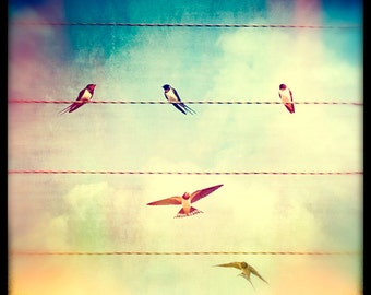 Nature photography, Swallows, Birds, Wires, Ttv, Vintage, Retro.