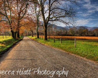 Country Lane II