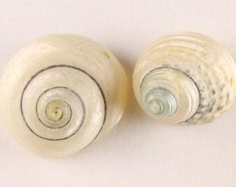 2x Iridescent Shells - N010