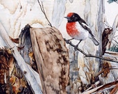 Red-capped Robin watercolour - wildlife art - nature, limited edition print