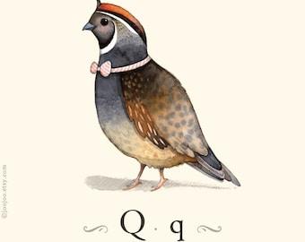 Q is for Quail, alphabet prints, Kids wall art, Nursery art, Watercolor painting, illustration print, Children wall art