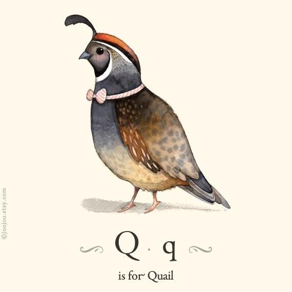 Q Is For Quail Q is for Quail alphabe...
