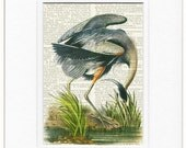 Audubon Great Blue Heron print