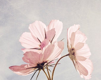 Pink flower photograph, pale pink cosmos, nature photography, garden flower photo, girls room decor, nursery art - You are my pink sunshine