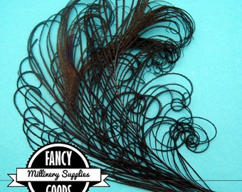 3 - Curled - Peacock Stems - Sprigs -  Feathers - Black