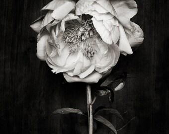 black and white_no_3
