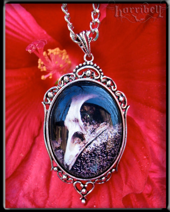 Taxidermy Bird Skull Necklace - SALE