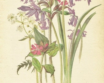 Flower Print - Red Campion - Wild Hyacinth - Vintage Botanical Book Plate Print - Country Diary of Edwardian Lady - Edith Holden - 1906