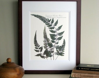 Pressed ferns print, 11x14 double matted, Japanese Painted fern, pressed fern plant, woodland nature ferns, wall decor no. 0032