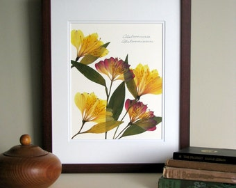 Pressed flowers print, 11x14 double matted, Alstroemeria flowers, wall art decor, no. 0064