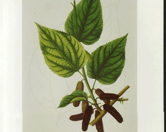 Mulberry Print Botanical by Prestele Book Plate SALE  Buy 3, get 1 FREE