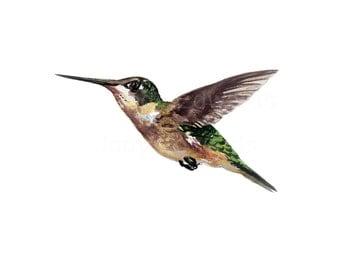Hummingbird in Flight - Archival Quality Print