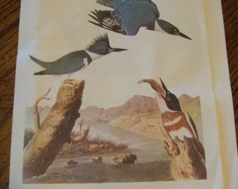 Vintage Audubon  Best Loved Bird Prints Belted Kingfisher