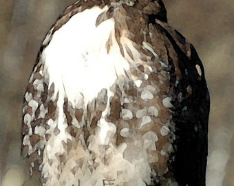 Hawk Greeting Card Nature Bird Photography Brown and White Hawk digital art watercolor enhanced