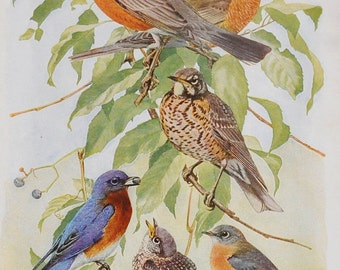 Vintage Bird Book Plate - Robins and Bluebirds - 1940s