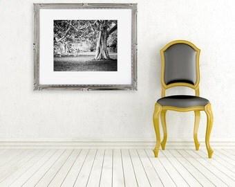 black and white tree photograph fine art photo nature monochrome wall decor B&W
