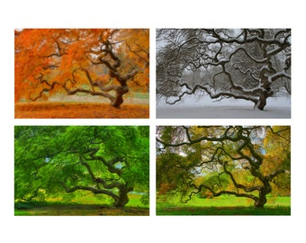 Japanese Maple Tree in Four Seasons Landscape Photography 8X12 Print Set Nature Tree of Life Zen Decor Autumn Winter Spring Holiday Gift