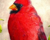 ACEO ATC size print , color pencil drawing, cardinal, bird art  print by John DelMastro, 2.5 by 3.5