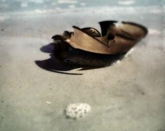 Printable Wall Art  | Digital Download Beach Art Print | Printable Decor | Horse Shoe Crab on Beach | Photography Art Digital Download