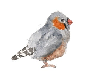 Bird art, watercolor painting, bird painting, watercolor animals, nature painting, watercolor bird, zebra finch, grey feathers, 7X5 print
