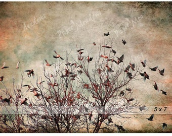 Bird Photography Download, Flock of Birds, Flying Birds, Instant Download, Wings, Rustic, Waxwings, Red, Blue, Black, 5x7 or 12x8