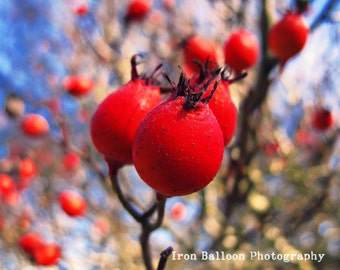 BRIGHT RED BERRY Photograph Nature