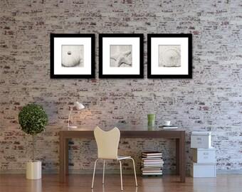 Shell Photography - Set of Three (3) Beach Decor - Black & White - Photography - Neutral - Starfish Shells Black White Home Decor