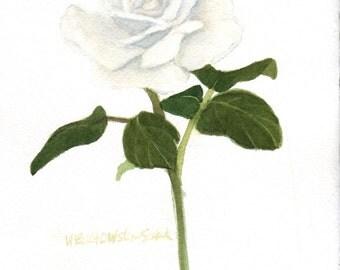 White Rose Original Watercolor