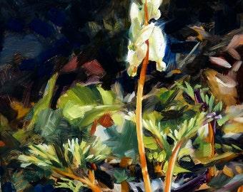 Oil painting: Dutchman's Breeches
