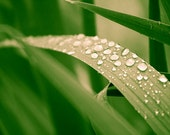 Macro Photography, Water Drops and Leaves, Raindrops, Emerald Green, Summer Rain, Leaves rainforest woodland 8x10 or 8x12 spring